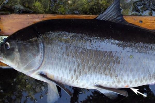 El abuelo de los peces 1920 1
