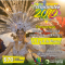 Carnavales 2019 en la ciudad de Las Toscas, los día 2, 3 y 4 de marzo