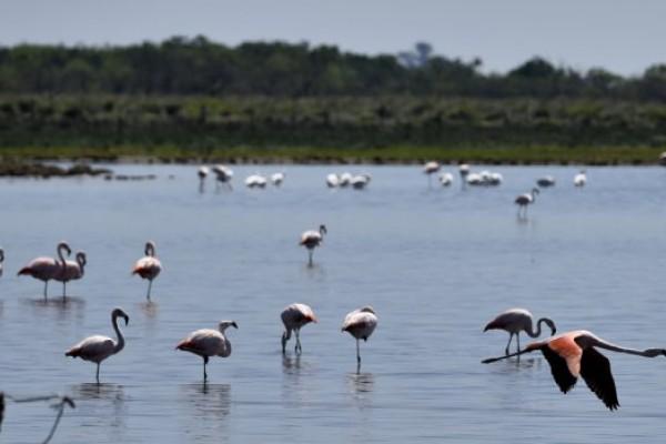 Santa Fe tiene casi la mitad de las especies de aves del país